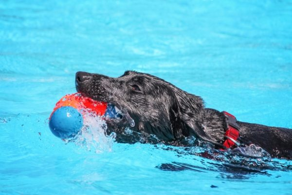 pool-safety-tips-for-dogs